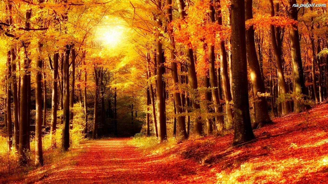 Znalezione obrazy dla zapytania las jesienią